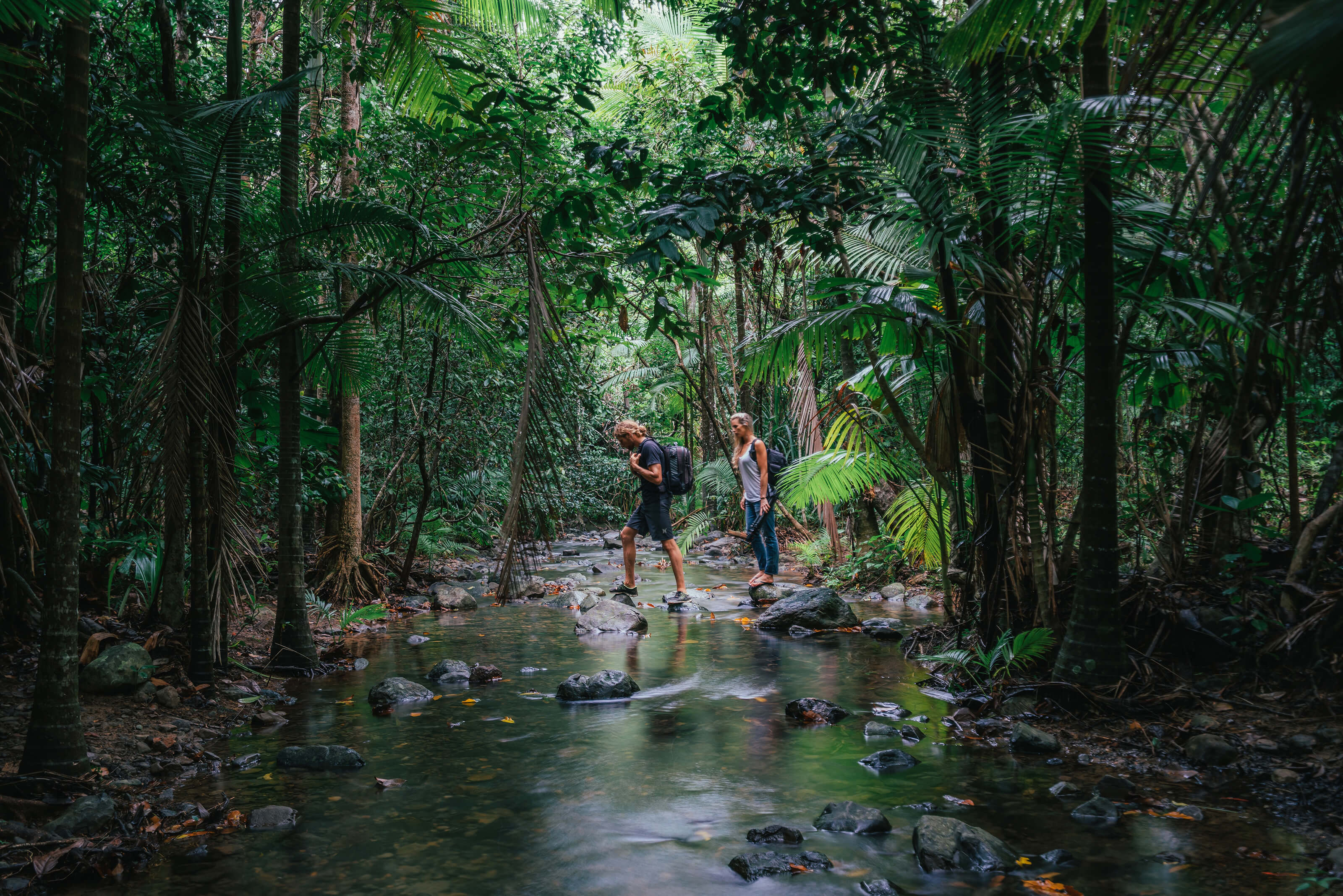 hiking in the Daintree Rainforest