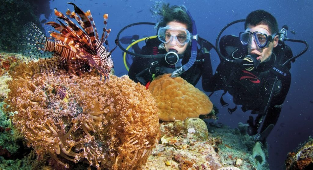 Scuba Diving and coral