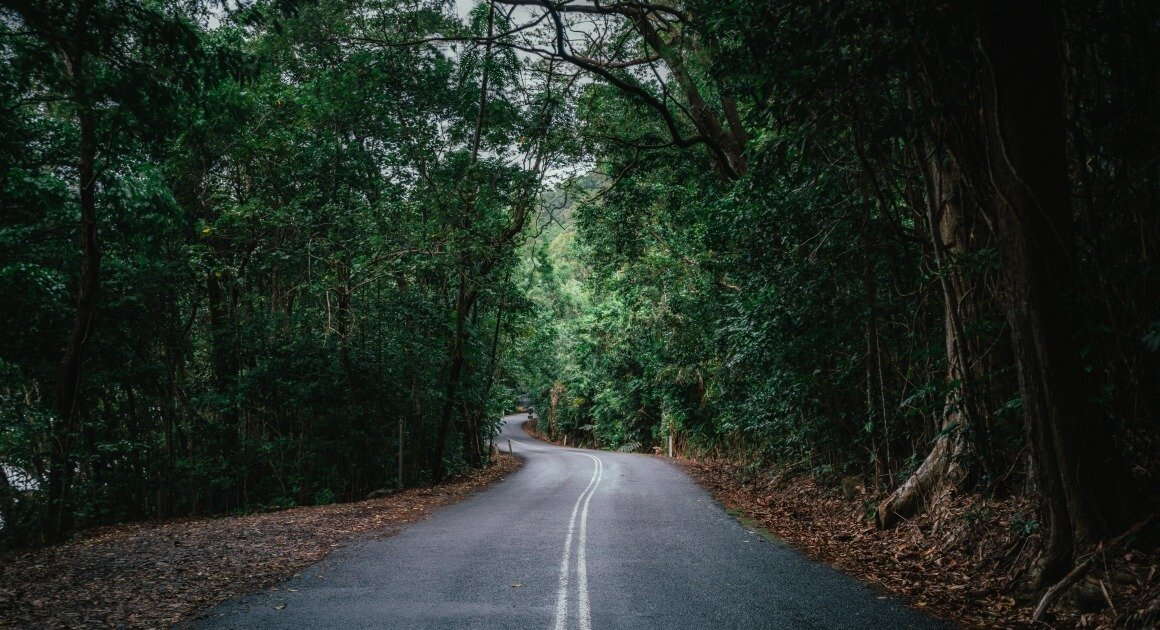 road in the daintree