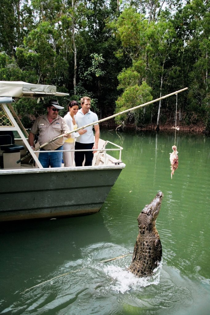 jumping crocodile being fed